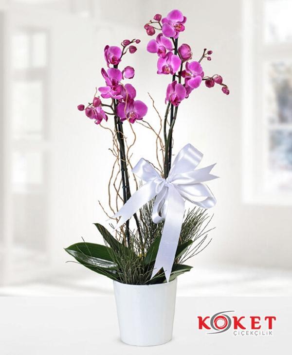 Çift Dal Mor Orkide