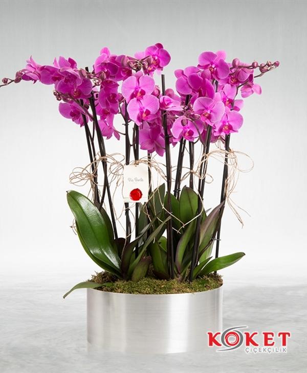 Dekoratif Metal Saksıda 8 li Orkide