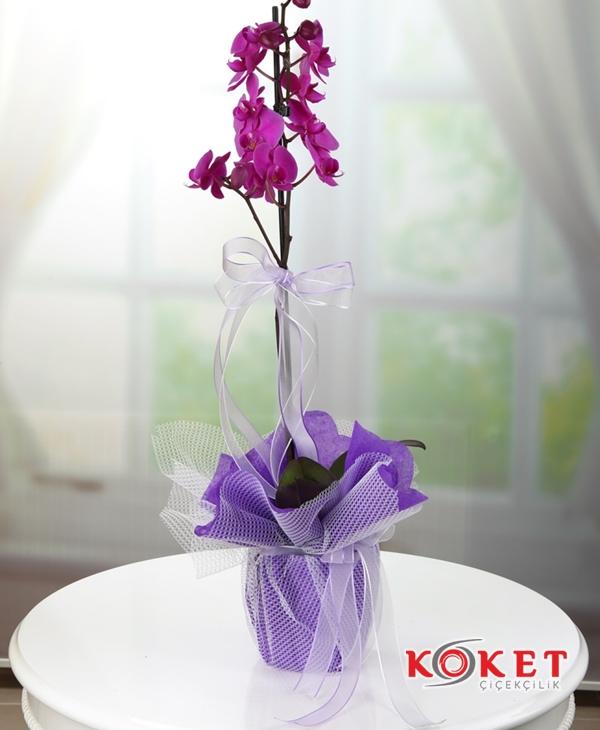 Tek Dal Lila Orkide